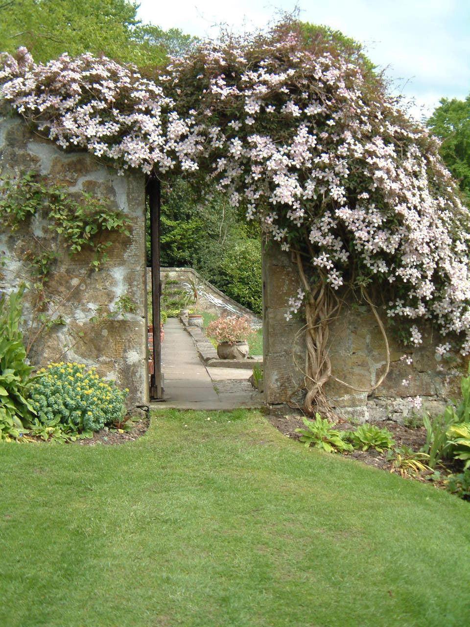 Climbers wall shrubs for Garden trees shrubs